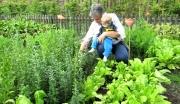 Garten11_Rentnerin_mit_Enkel_beim_Gärtnern